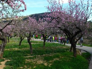 Walking through the blossom in parcent